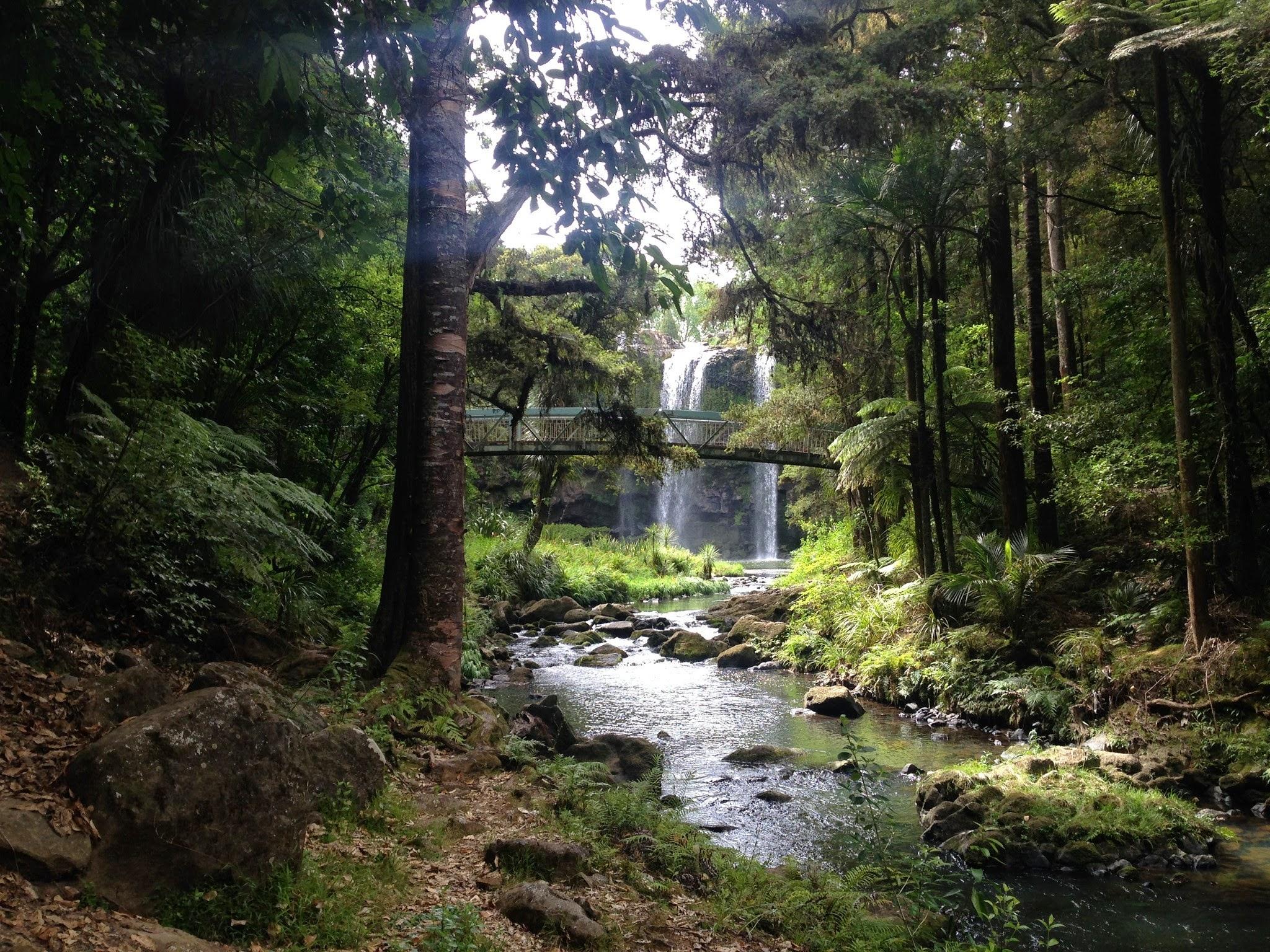 Whangarei, Whangarei Falls, backpacking, travelling, travels, blog, travel blog, Paihia, northland, north island,