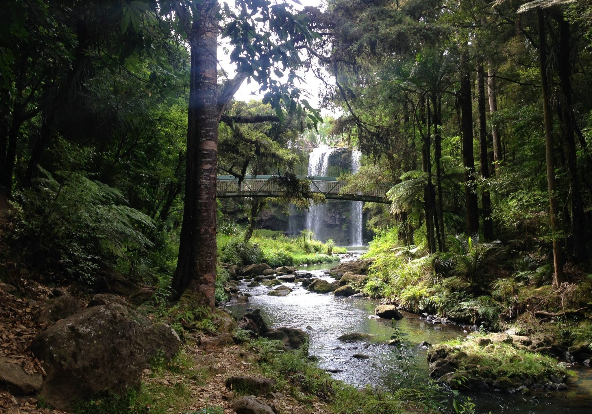 Whangarei Falls, falls, waterfall, whangarei, northland, north island, new zealand
