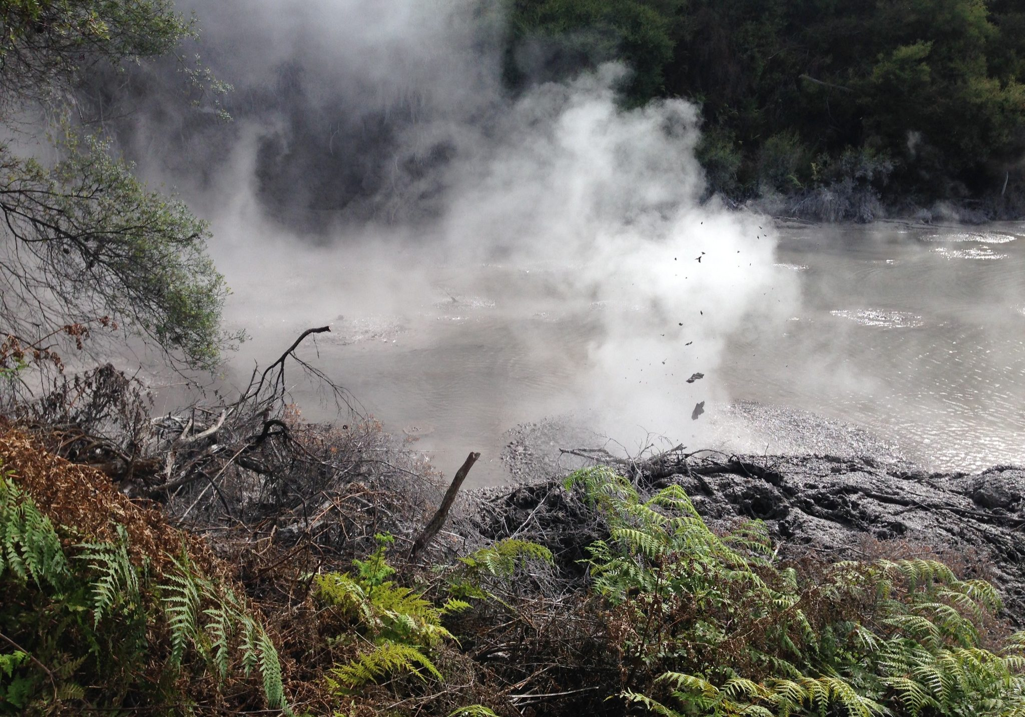 bubbly, mud, pool, wai-o-tapu, north island, rotorua