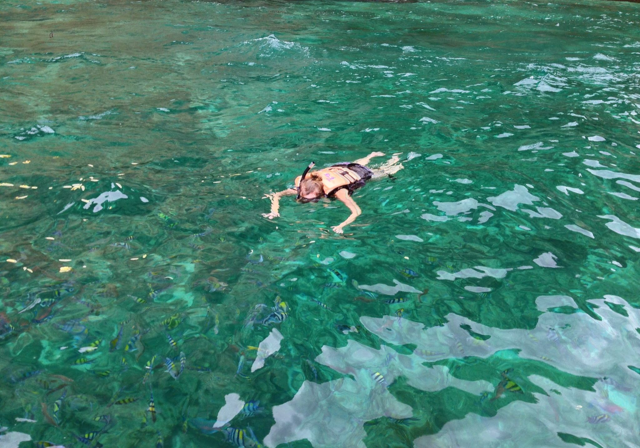Snorkelling, Koh Phi Phi, thailand, islands, sea, water, beach, fish, marine, marine life, travelling, backpacking, travels, diving, long-tail boat, trips. mermaid,
