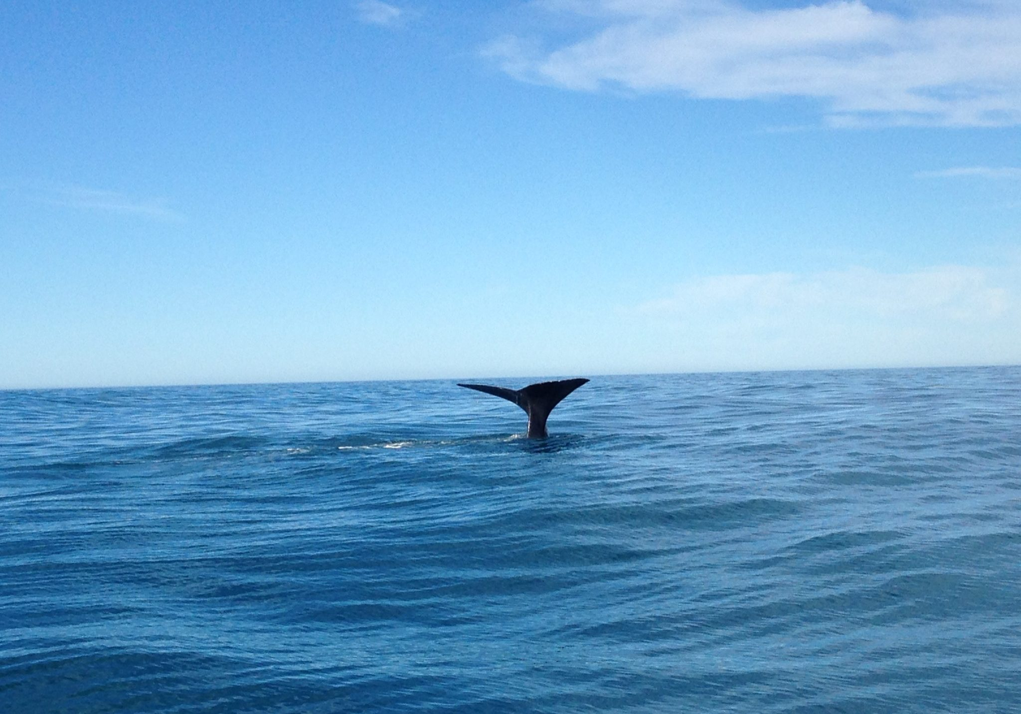 whale watching, Kaikoura, whales, boats, dolphins, sea, coast, wildlife, nature, nature watch